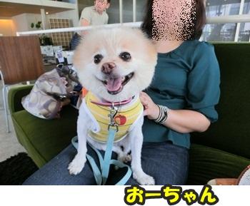 犬恋文譲渡会10.12022
