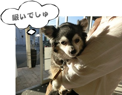 犬恋文譲渡会10.12129