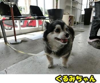 犬恋文譲渡会10.12025