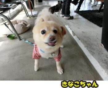 犬恋文譲渡会10.12008