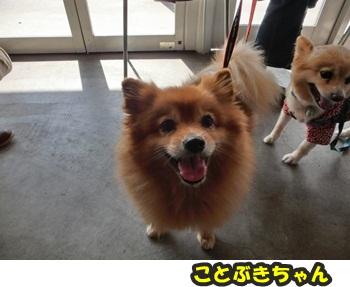 犬恋文譲渡会10.12072