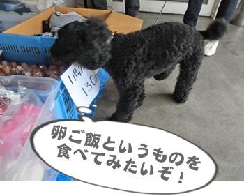 犬恋文譲渡会10.12010