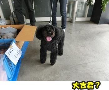 犬恋文譲渡会10.12009