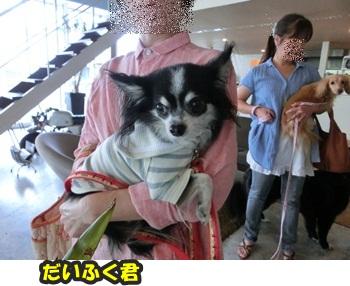 犬恋文譲渡会10.12053