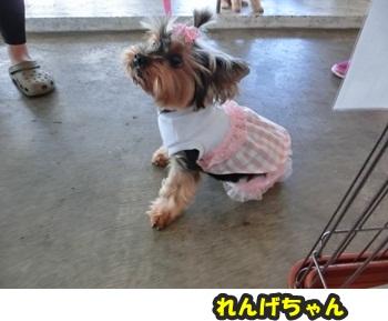 犬恋文譲渡会10.12033