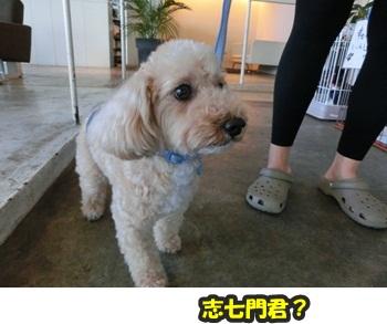 犬恋文譲渡会10.12013