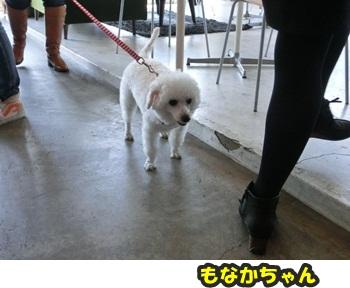 犬恋文譲渡会10.12068