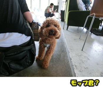 犬恋文譲渡会10.12037