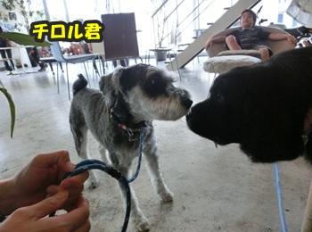 犬恋文譲渡会10.12065