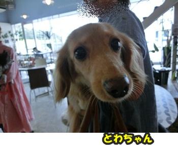 犬恋文譲渡会10.12050