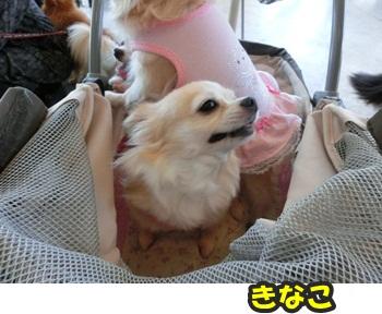犬恋文譲渡会10.12092