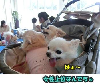 犬恋文譲渡会10.12094