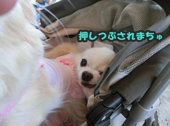 犬恋文譲渡会10.12101