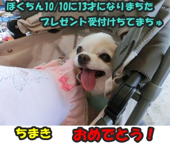 犬恋文譲渡会10.12102
