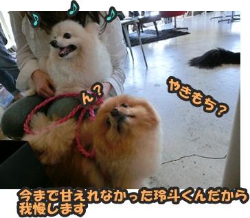 犬恋文譲渡会10.12107