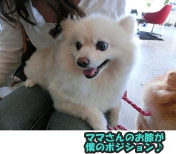 犬恋文譲渡会10.12104