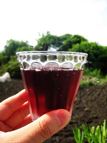 ワインimage