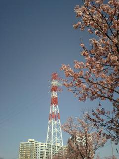 20100330稲城のサクラ.JPG