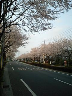 20100406府中街道.JPG