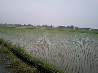 20100523田んぼ雨.JPG