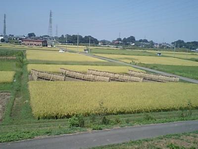 20100911埼玉.JPG