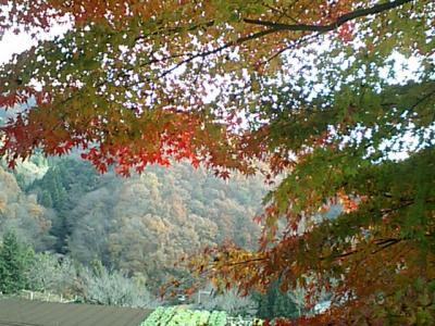 20101127藤野紅葉.JPG