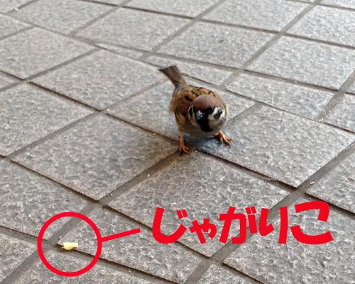 IMG_3121.jpg