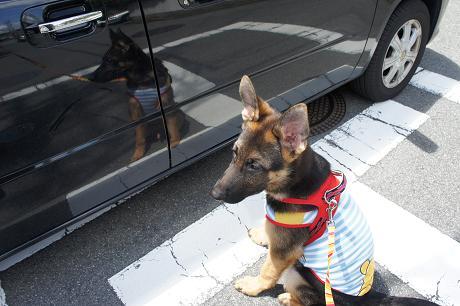 車で行くのか~