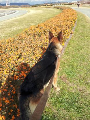 なんかオレンジの花?はっぱ?