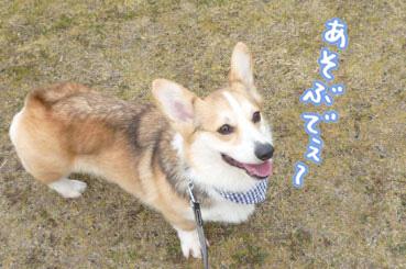 taro321.jpg