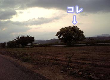 taro401.jpg