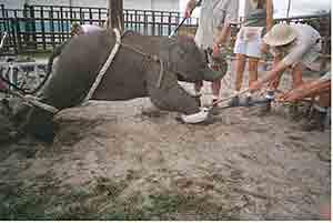 elephnt.jpg