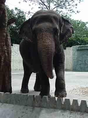 elephnt1.jpg