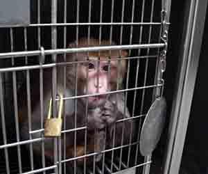 monkey_20130213205227.jpg
