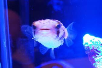 aqua0220_09.jpg