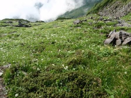 5峰奥又白側のお花畑