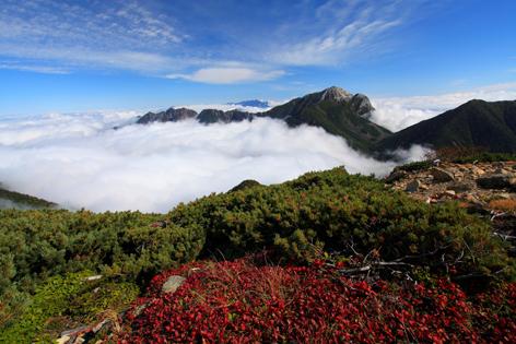 ウラシマツツジの紅葉と雲わく東駒ヶ岳