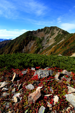 ウラシマツツジの紅葉と仙丈ヶ岳