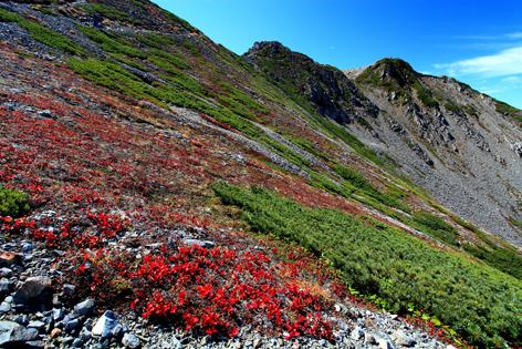 仙丈ヶ岳と山肌を覆う紅葉