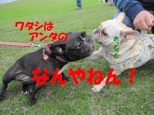 IMG_2582_convert_20101109181855ペイント