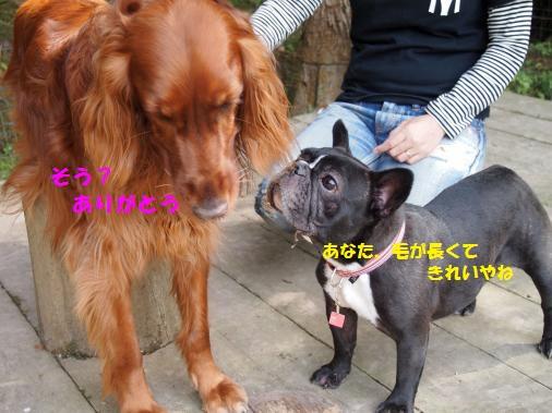 P5150297_convert_20110516094211ペイント