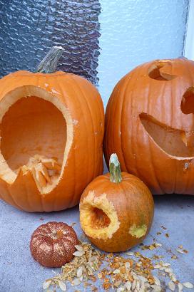 かぼちゃ種7