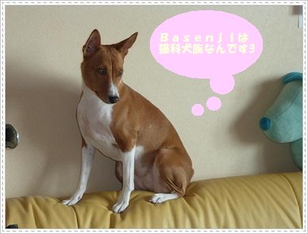 Ami子さんP1090852