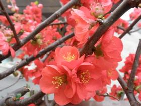 日本で見れた花