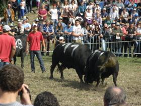 Raronの闘牛