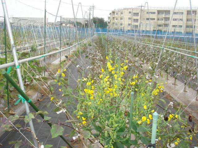 関野農園1