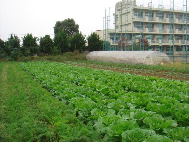 渋谷農園2
