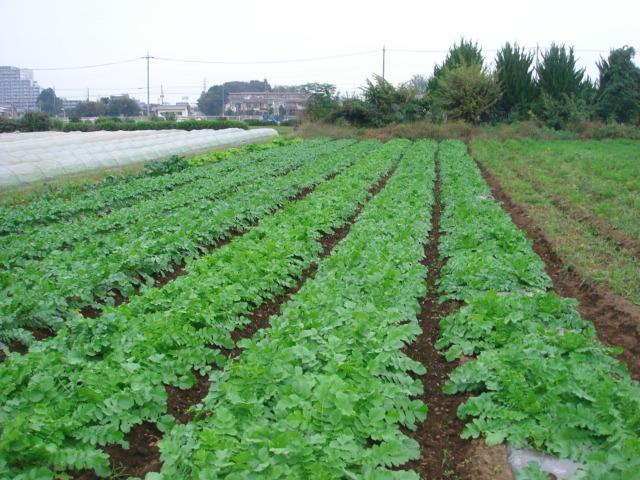 渋谷農園3