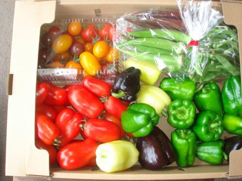 野菜セット2011.8.16
