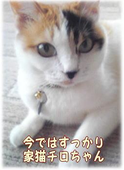 satooya650.jpg